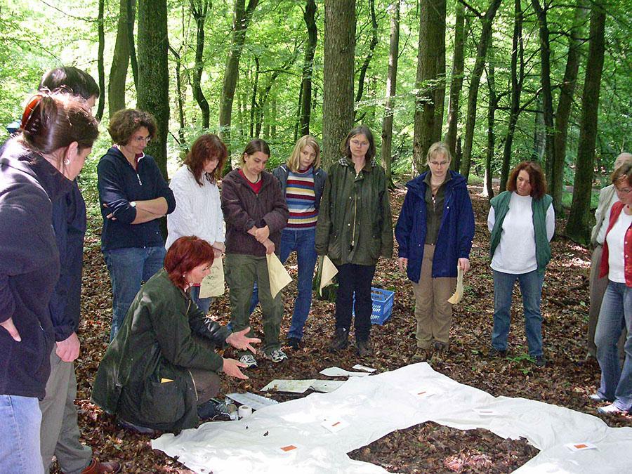 Die Waldakademie im Wildwald Voßwinkel startet wieder mit Veranstaltungen der Waldpädagogik. (Foto: Wildwald Voßwinkel)