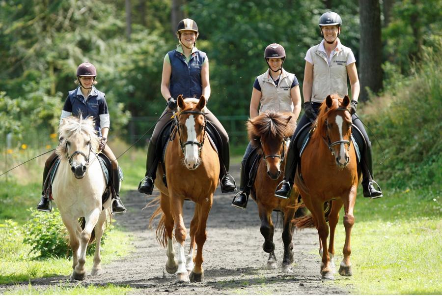 Am 27. Juni können Reiterfreunde in Voßwinkel ihr Können unter Beweis stellen. (Foto: Jacques Toffi/Pferdesportverband Westfalen)
